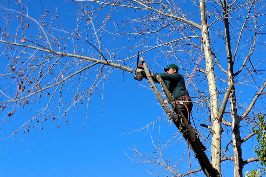 Contact Us-Ruskin FL Tree Trimming and Stump Grinding Services-We Offer Tree Trimming Services, Tree Removal, Tree Pruning, Tree Cutting, Residential and Commercial Tree Trimming Services, Storm Damage, Emergency Tree Removal, Land Clearing, Tree Companies, Tree Care Service, Stump Grinding, and we're the Best Tree Trimming Company Near You Guaranteed!