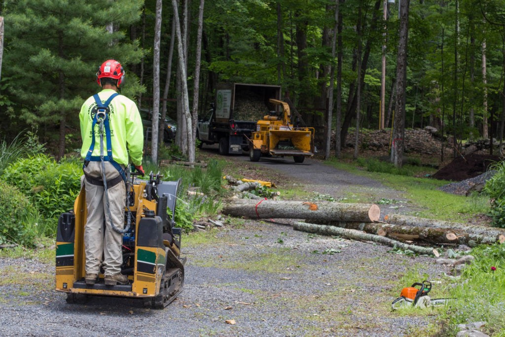 Emergency Tree Removal-Ruskin FL Tree Trimming and Stump Grinding Services-We Offer Tree Trimming Services, Tree Removal, Tree Pruning, Tree Cutting, Residential and Commercial Tree Trimming Services, Storm Damage, Emergency Tree Removal, Land Clearing, Tree Companies, Tree Care Service, Stump Grinding, and we're the Best Tree Trimming Company Near You Guaranteed!