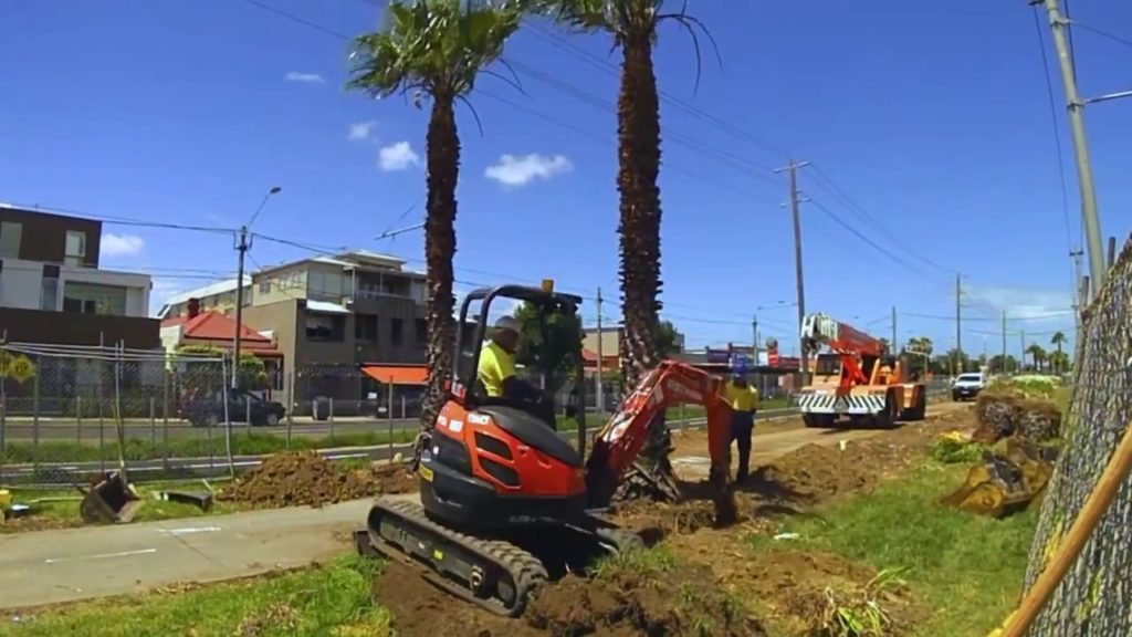 Palm Tree Removal-Ruskin FL Tree Trimming and Stump Grinding Services-We Offer Tree Trimming Services, Tree Removal, Tree Pruning, Tree Cutting, Residential and Commercial Tree Trimming Services, Storm Damage, Emergency Tree Removal, Land Clearing, Tree Companies, Tree Care Service, Stump Grinding, and we're the Best Tree Trimming Company Near You Guaranteed!