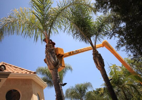 Palm Tree Trimming-Ruskin FL Tree Trimming and Stump Grinding Services-We Offer Tree Trimming Services, Tree Removal, Tree Pruning, Tree Cutting, Residential and Commercial Tree Trimming Services, Storm Damage, Emergency Tree Removal, Land Clearing, Tree Companies, Tree Care Service, Stump Grinding, and we're the Best Tree Trimming Company Near You Guaranteed!