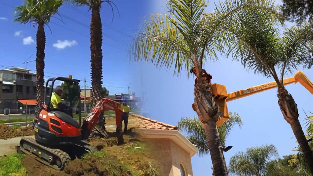 Palm tree trimming & palm tree removal-Ruskin FL Tree Trimming and Stump Grinding Services-We Offer Tree Trimming Services, Tree Removal, Tree Pruning, Tree Cutting, Residential and Commercial Tree Trimming Services, Storm Damage, Emergency Tree Removal, Land Clearing, Tree Companies, Tree Care Service, Stump Grinding, and we're the Best Tree Trimming Company Near You Guaranteed!