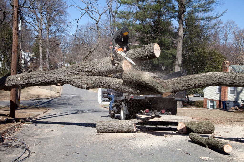 Residential Tree Services-Ruskin FL Tree Trimming and Stump Grinding Services-We Offer Tree Trimming Services, Tree Removal, Tree Pruning, Tree Cutting, Residential and Commercial Tree Trimming Services, Storm Damage, Emergency Tree Removal, Land Clearing, Tree Companies, Tree Care Service, Stump Grinding, and we're the Best Tree Trimming Company Near You Guaranteed!