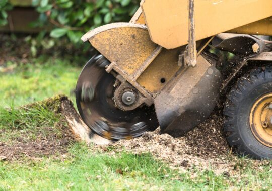 Stump Grinding-Ruskin FL Tree Trimming and Stump Grinding Services-We Offer Tree Trimming Services, Tree Removal, Tree Pruning, Tree Cutting, Residential and Commercial Tree Trimming Services, Storm Damage, Emergency Tree Removal, Land Clearing, Tree Companies, Tree Care Service, Stump Grinding, and we're the Best Tree Trimming Company Near You Guaranteed!