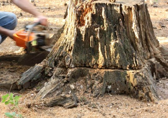Stump Removal-Ruskin FL Tree Trimming and Stump Grinding Services-We Offer Tree Trimming Services, Tree Removal, Tree Pruning, Tree Cutting, Residential and Commercial Tree Trimming Services, Storm Damage, Emergency Tree Removal, Land Clearing, Tree Companies, Tree Care Service, Stump Grinding, and we're the Best Tree Trimming Company Near You Guaranteed!