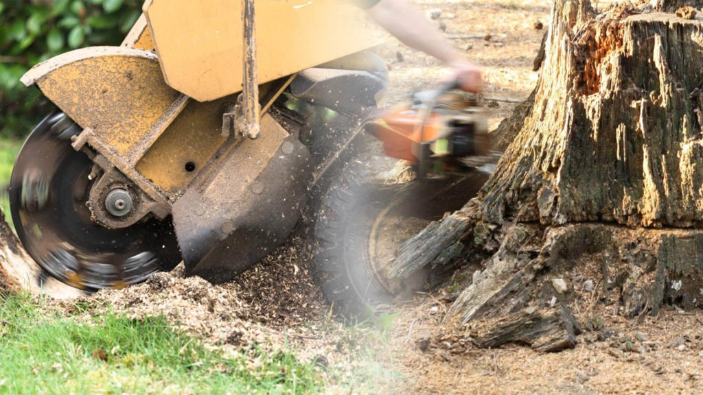 Stump grinding & removal-Ruskin FL Tree Trimming and Stump Grinding Services-We Offer Tree Trimming Services, Tree Removal, Tree Pruning, Tree Cutting, Residential and Commercial Tree Trimming Services, Storm Damage, Emergency Tree Removal, Land Clearing, Tree Companies, Tree Care Service, Stump Grinding, and we're the Best Tree Trimming Company Near You Guaranteed!