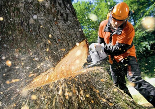 Tree Cutting-Ruskin FL Tree Trimming and Stump Grinding Services-We Offer Tree Trimming Services, Tree Removal, Tree Pruning, Tree Cutting, Residential and Commercial Tree Trimming Services, Storm Damage, Emergency Tree Removal, Land Clearing, Tree Companies, Tree Care Service, Stump Grinding, and we're the Best Tree Trimming Company Near You Guaranteed!