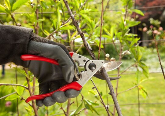 Tree Pruning-Ruskin FL Tree Trimming and Stump Grinding Services-We Offer Tree Trimming Services, Tree Removal, Tree Pruning, Tree Cutting, Residential and Commercial Tree Trimming Services, Storm Damage, Emergency Tree Removal, Land Clearing, Tree Companies, Tree Care Service, Stump Grinding, and we're the Best Tree Trimming Company Near You Guaranteed!